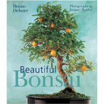BEAUTIFUL BONSAI  Bruno Delmer and Jacques Boulay
